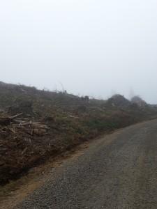 fog wasteland