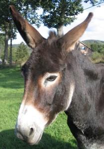 02-05-16--donkey